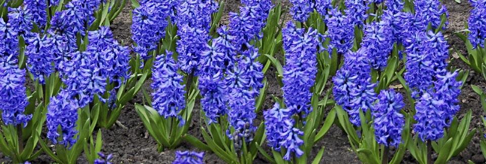 Flowers in Soil iStock
