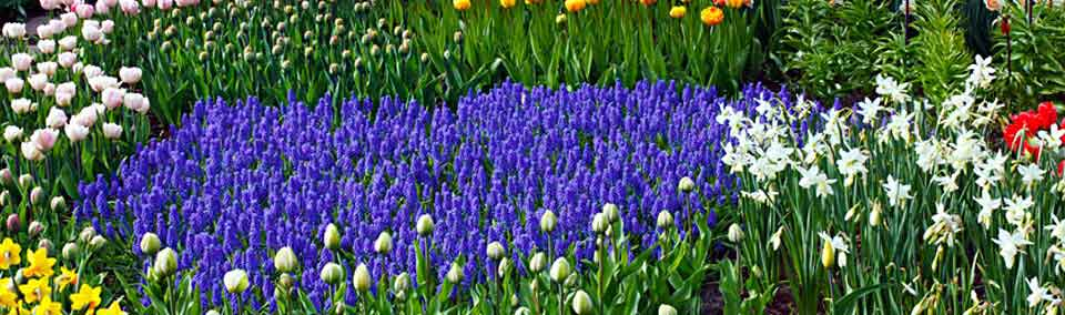 colorful-flower-garden-Header