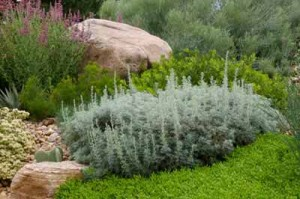 Low-water perennial garden